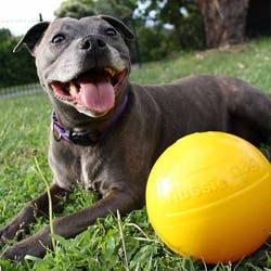 Aussie Dog Tucker Ball