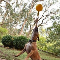 Aussie Dog Home Alone Toy