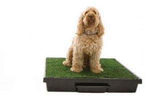 The Pet Loo - Backyard in a  box